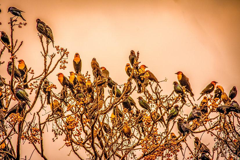 Birds 186