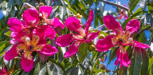 Flowers and blooms in Lake Chapala/ Flores y flores en el lago de Chapala 596