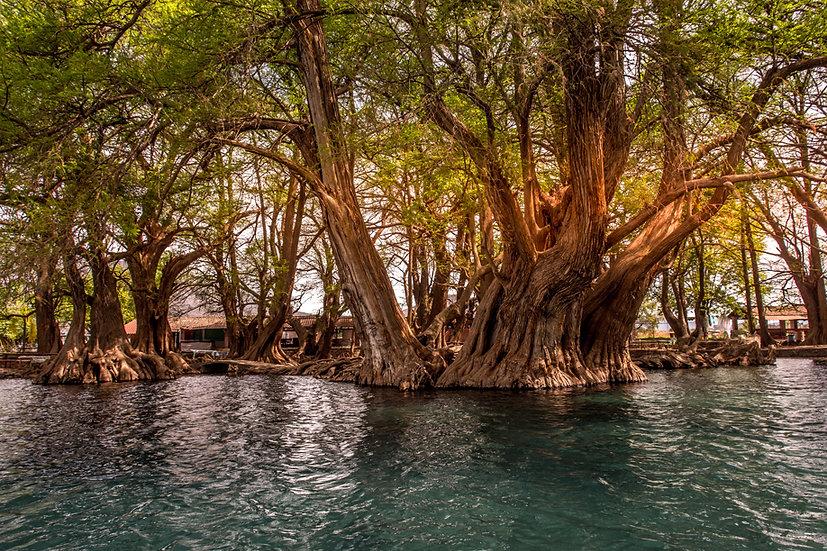 Lago de Camécuaro, Michoacan 10-021