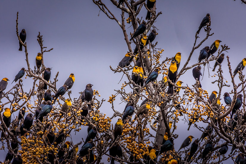 Birds 192