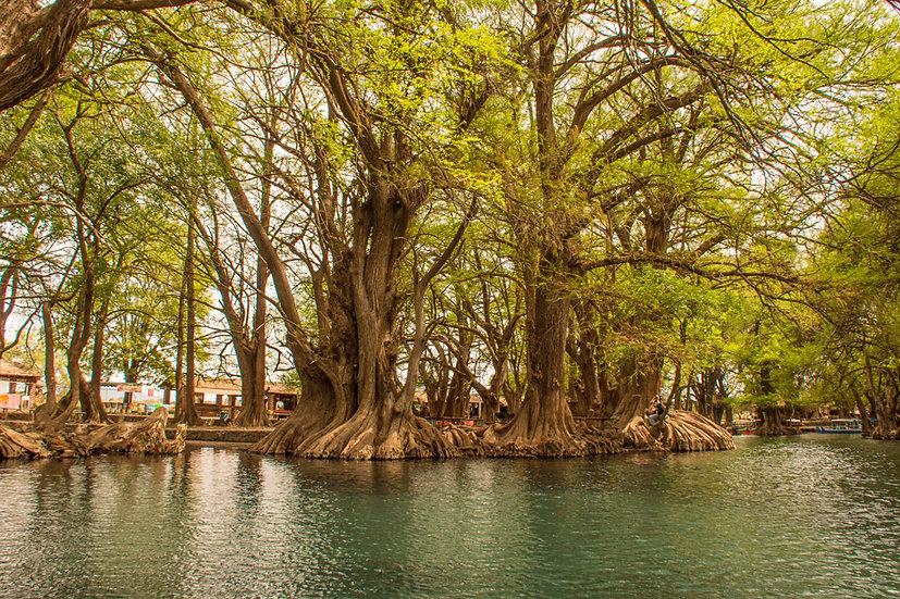 Lago de Camécuaro, Michoacan 10-039
