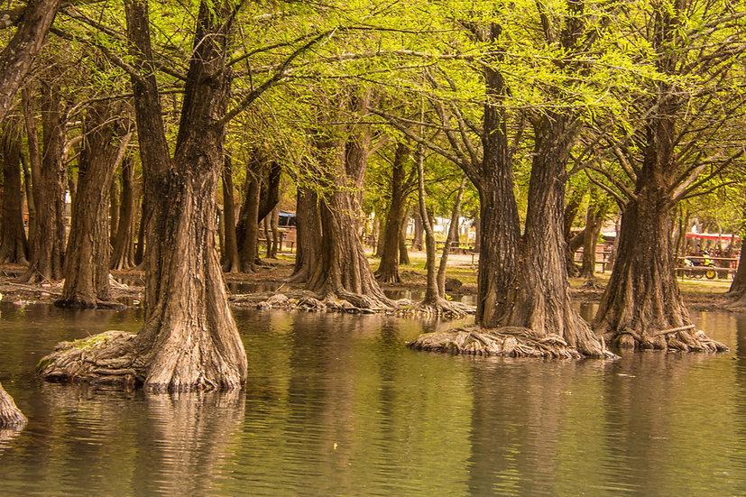 Lago de Camécuaro, Michoacan 10-034