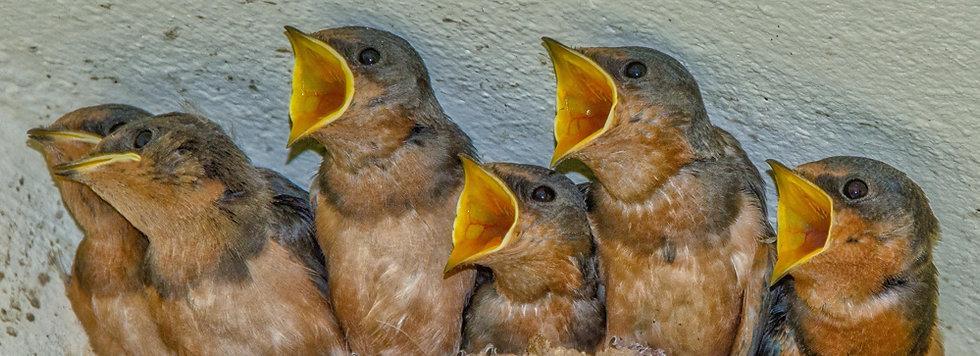 Birds 123