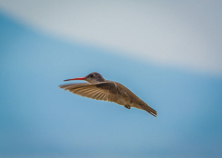 Bird / Pájaro 168