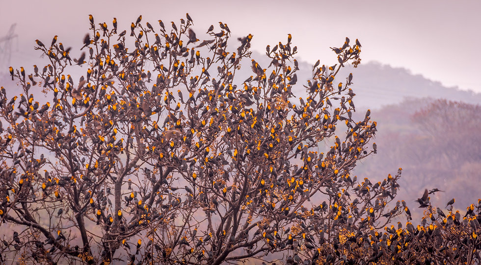 Birds 183