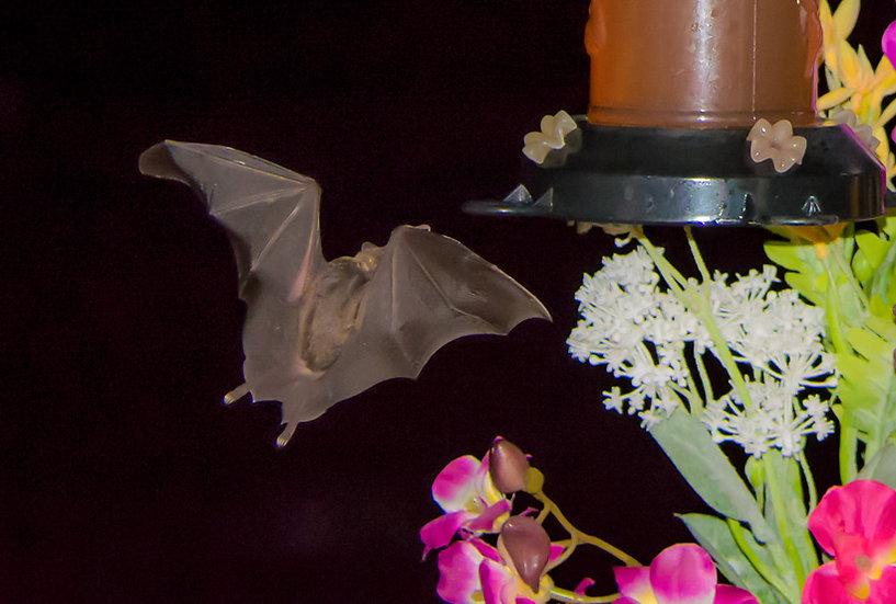 Bat / Bate 167