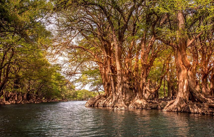 Lago de Camécuaro, Michoacan 10-014