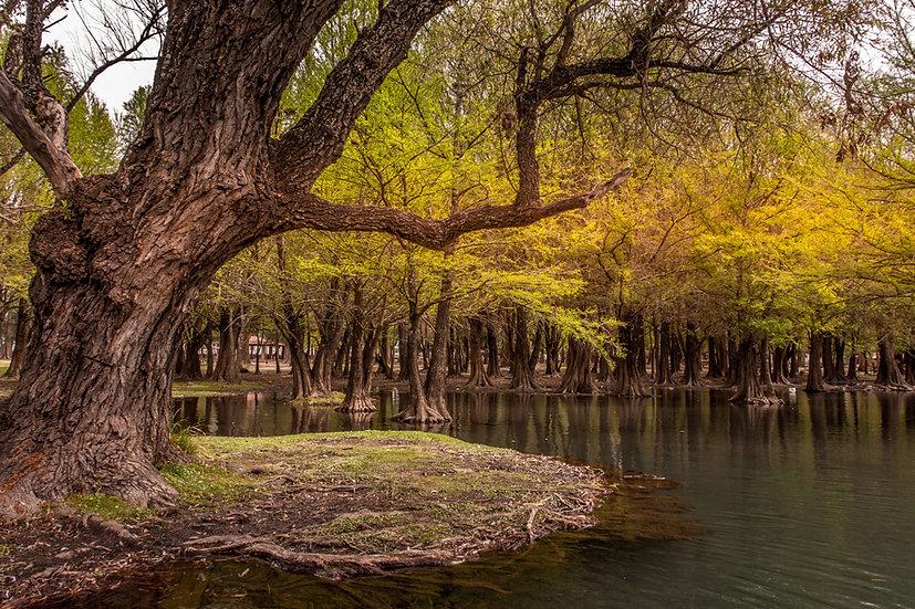 Lago de Camécuaro, Michoacan 10-033
