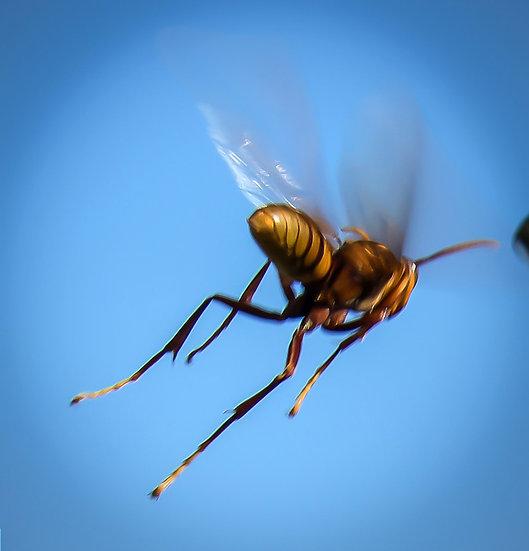Wasp / Avispa 904