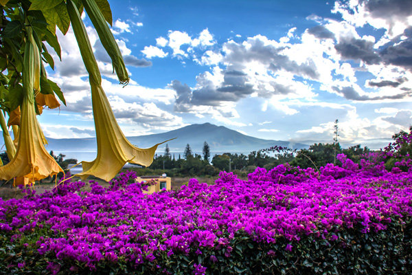 Flowers and blooms in Lake Chapala/Flores y flores en el lago de Chapala 507-A