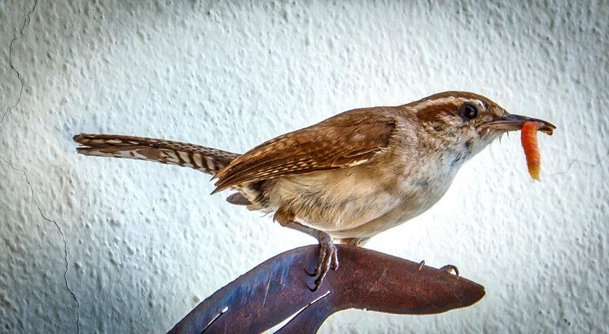 Busy Feeding the Young Birds / Ocupado Alimentando a los Pájaros Jóvenes 129