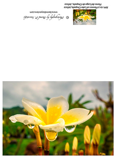 Flowers and blooms, Lake Chapala/ Flores y flores en el lago de Chapala 504-Gb2