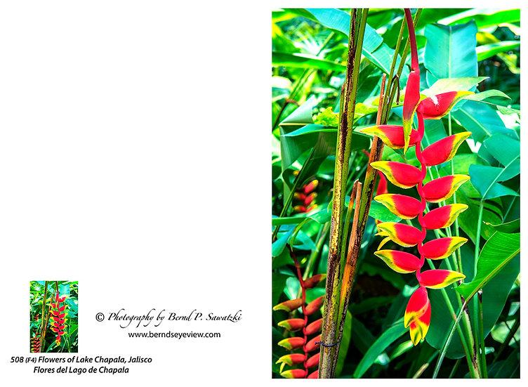 Flowers and blooms, Lake Chapala/ Flores y flores en el lago de Chapala 508-F4