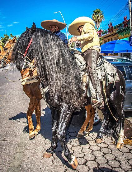 Friesen Horse / Caballo de Friesen 636