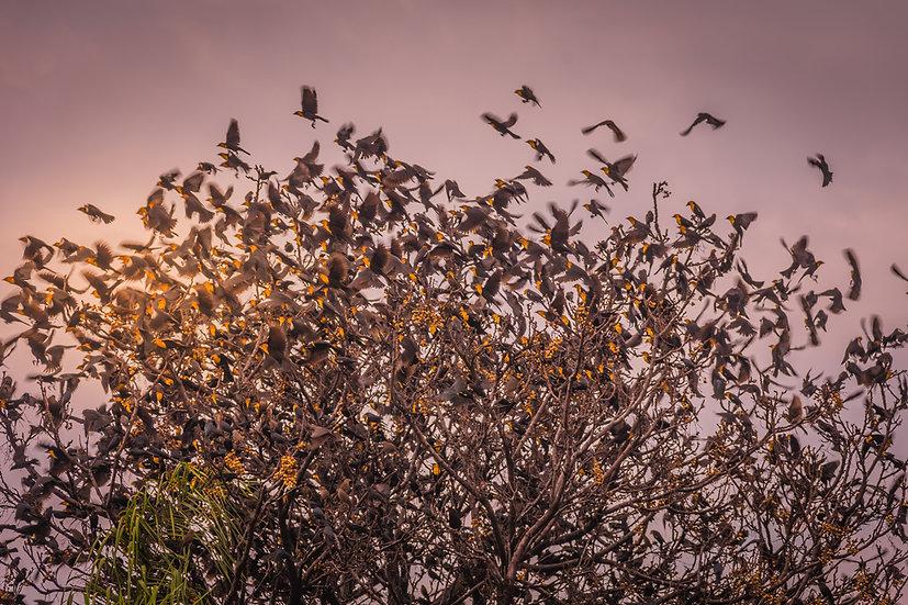 Birds 184