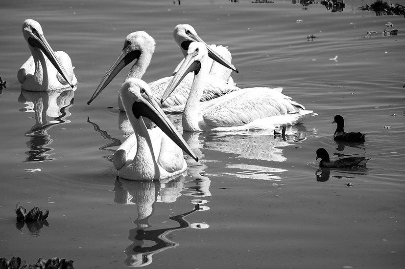 Black and White / En Blanco y Negro 151