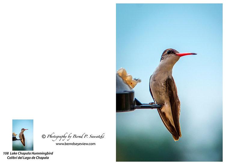 Hummingbird / Colibri 108
