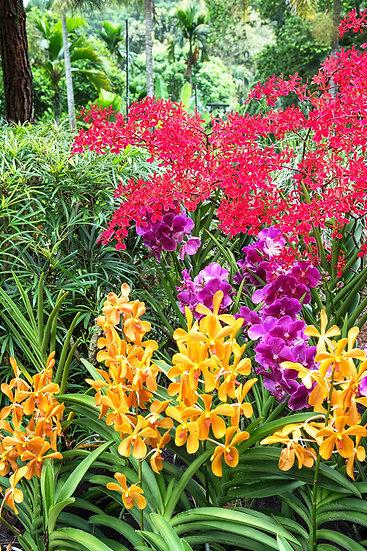 Flowers and blooms in Lake Chapala/ Flores y flores en el lago de Chapala 518