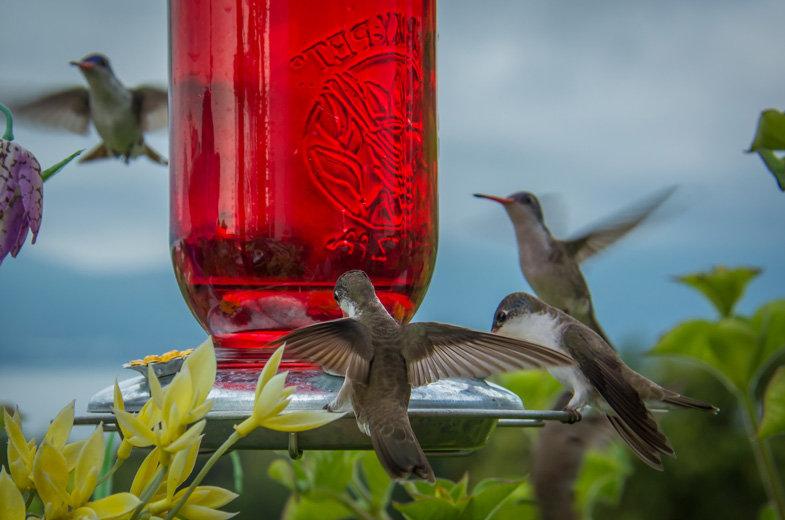 Bird / Pájaro 172