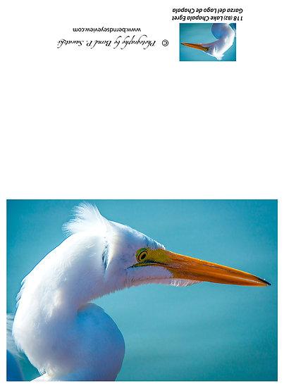 Egret / Garceta 118-B2