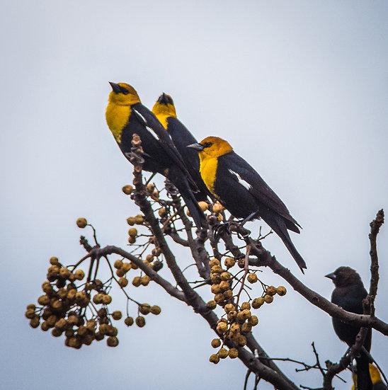 Birds 185