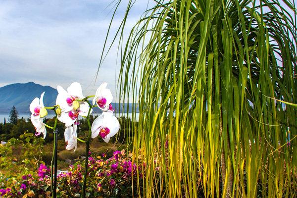 Flowers and blooms in Lake Chapala/ Flores y flores en el lago de Chapala 590