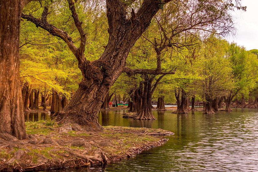 Lago de Camécuaro, Michoacan 10-031