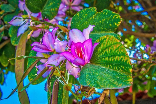 Flowers and blooms in Lake Chapala/Flores y flores en el lago de Chapala 555-Ga1