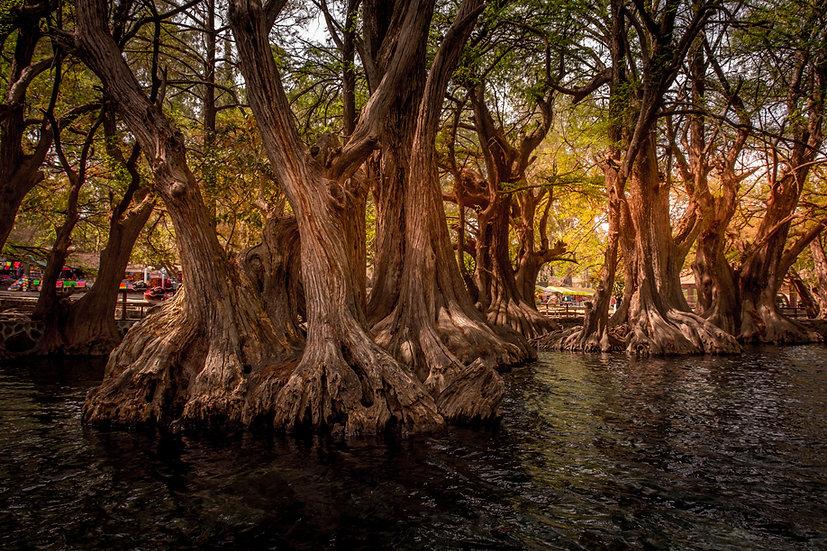 Lago de Camécuaro, Michoacan 10-015