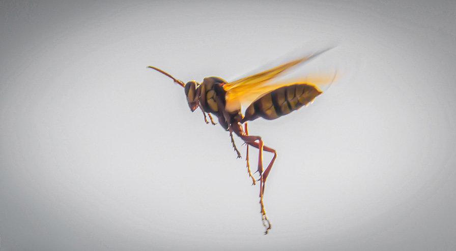 Wasp / Avispa 910