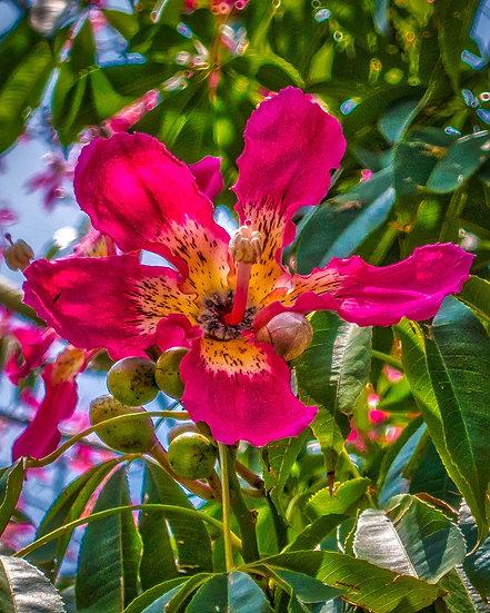 Flowers and blooms in Lake Chapala/ Flores y flores en el lago de Chapala 565