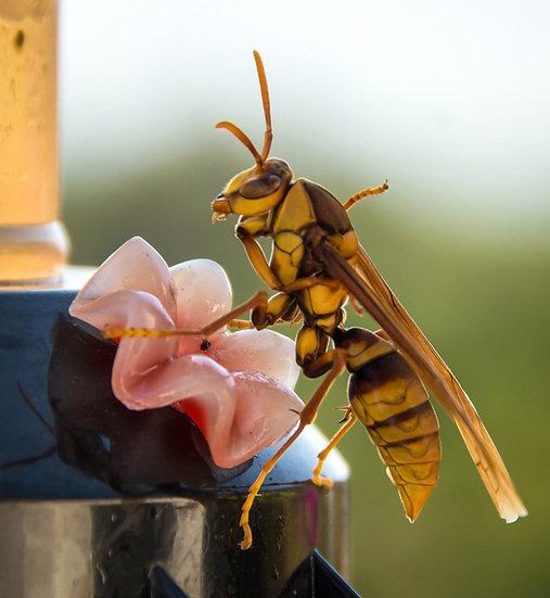 Wasp / Avispa 902