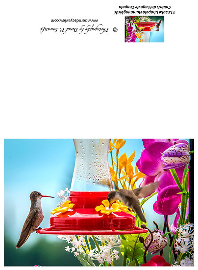 Hummingbird / Colibri 112