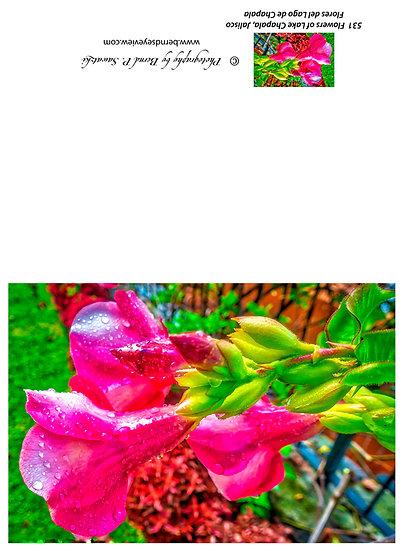 Flowers and blooms in Lake Chapala/ Flores y flores en el lago de Chapala 531
