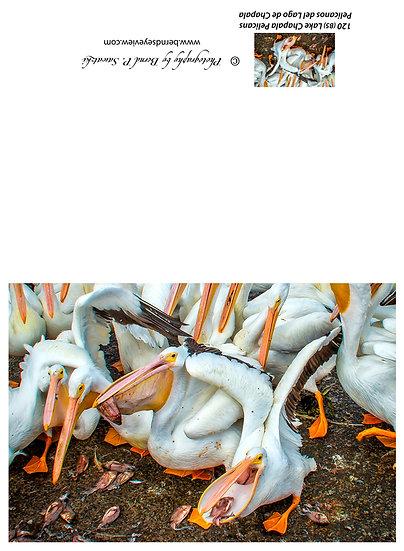Pelican's at Petatan / Pelicanos de Petatan, Michoacan 120-B5
