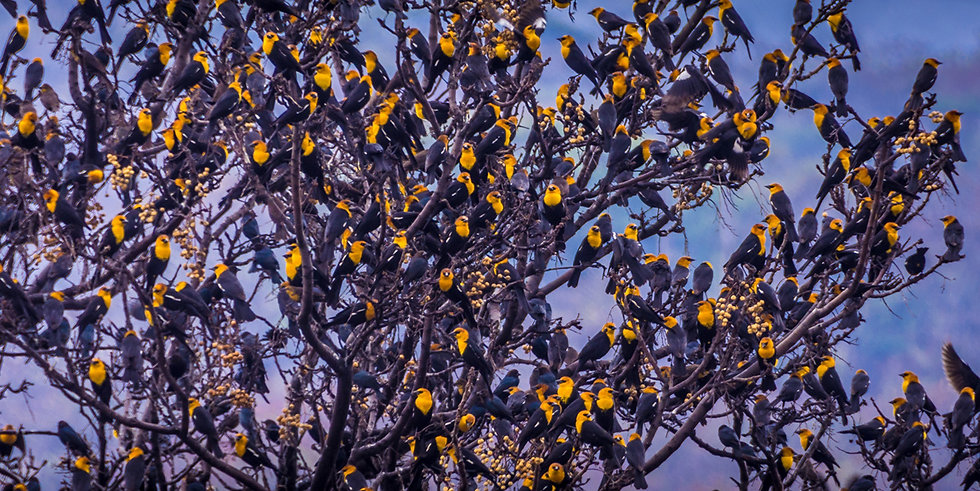 Birds 182