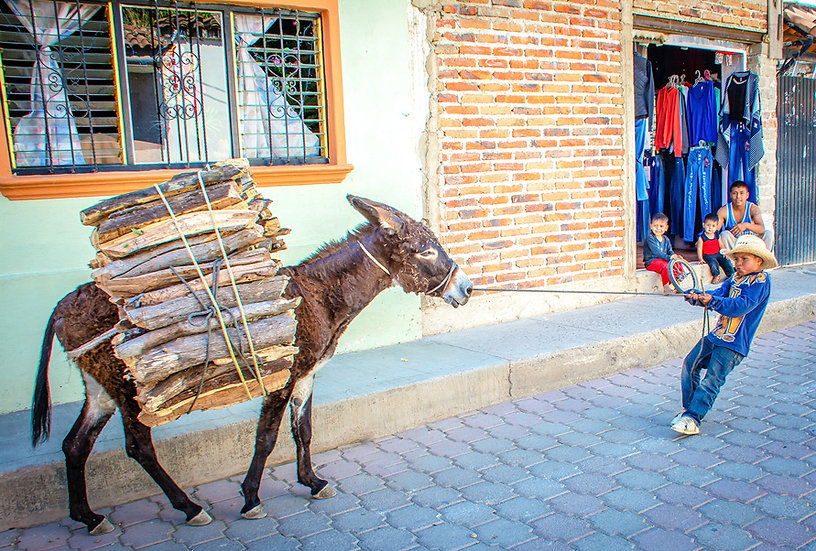 Boy with stubborn Donkey / Niño con obstinado burro 605-F3