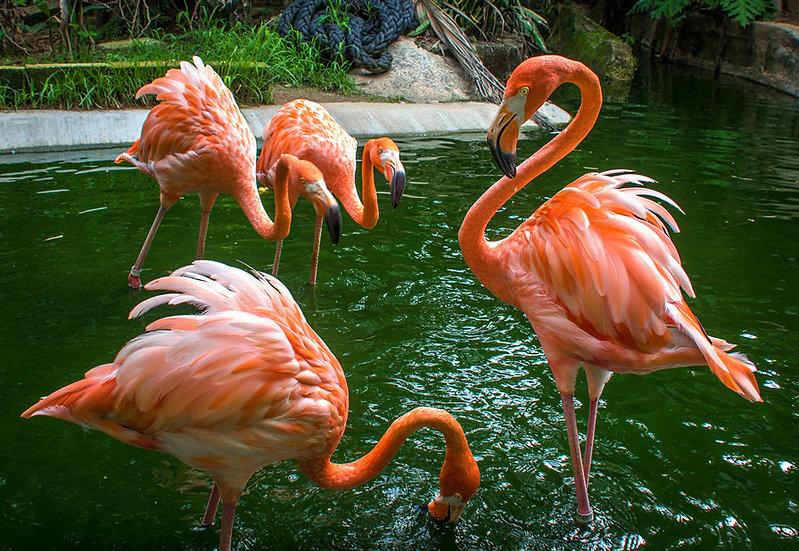 Flamingo 933