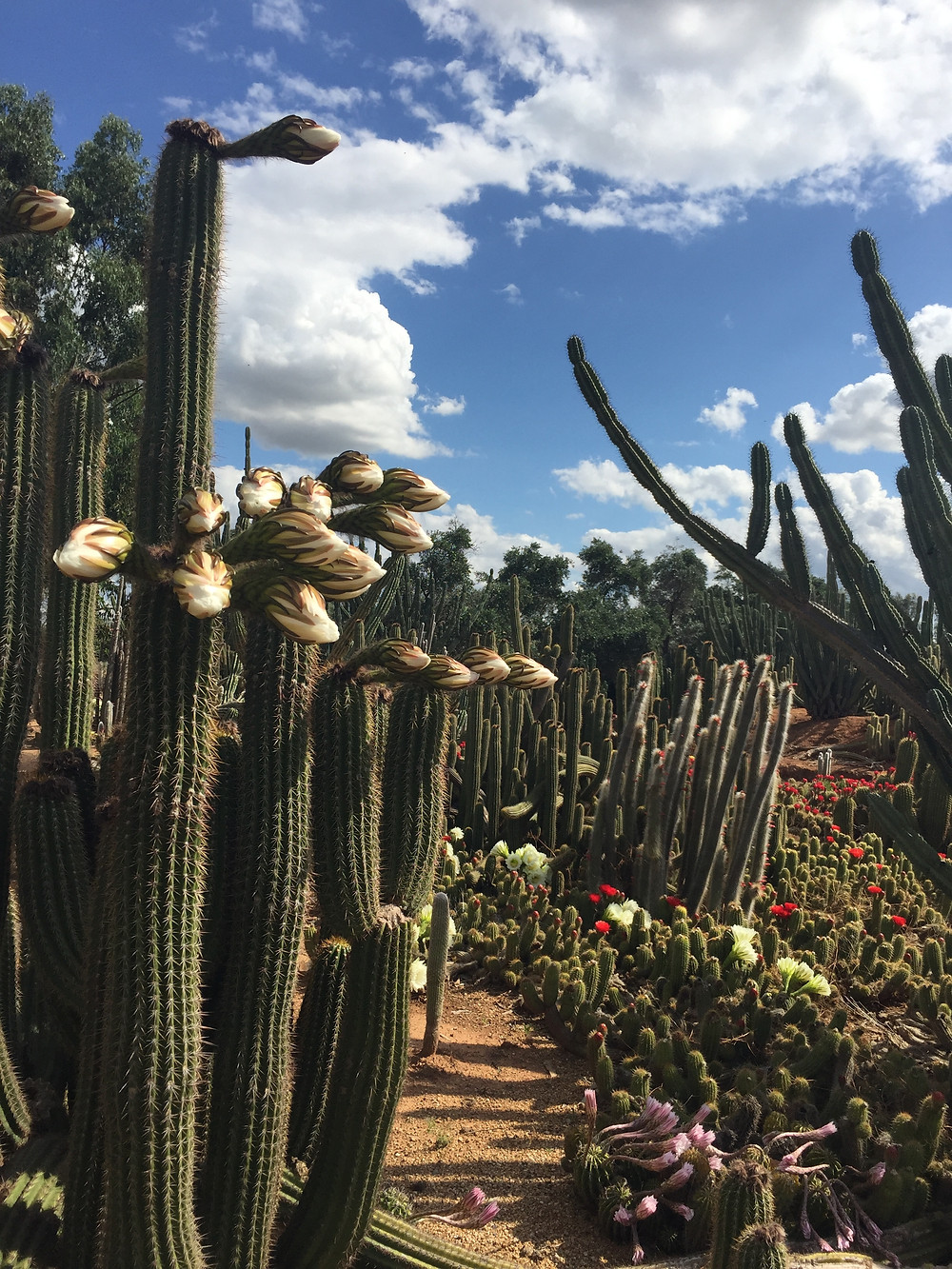 WHEN IN YARRAWONGA POP INTO CACTUS COUNTRY, IT'S PRETTY AMAZING.