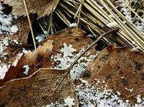 Snøkrystaller 3.jpg