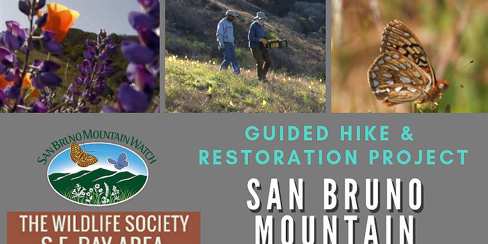 San Bruno Mountain Guided Hike and Restoration Project