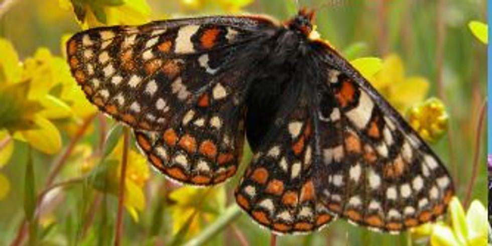 Grassland Butterfly Symposium