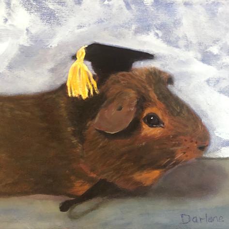 Guinea Pig graduate