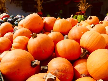 Why Wednesday: Pumpkin Fruit or Pumpkin Veggie?