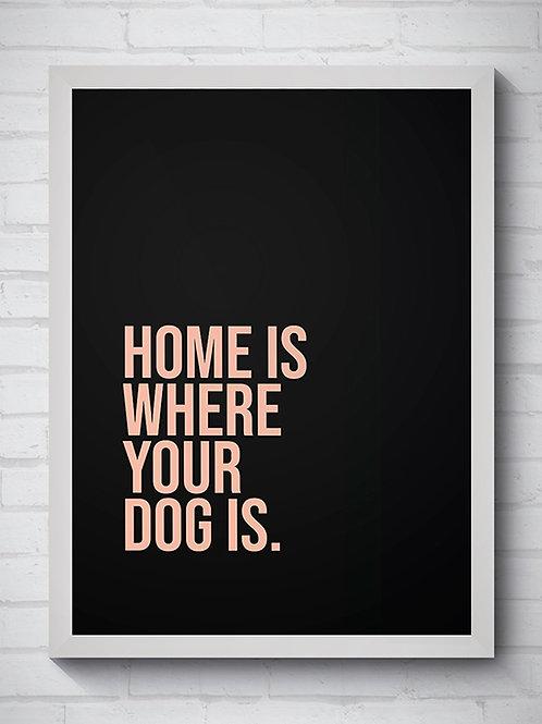 HOME DOG SALMÃO