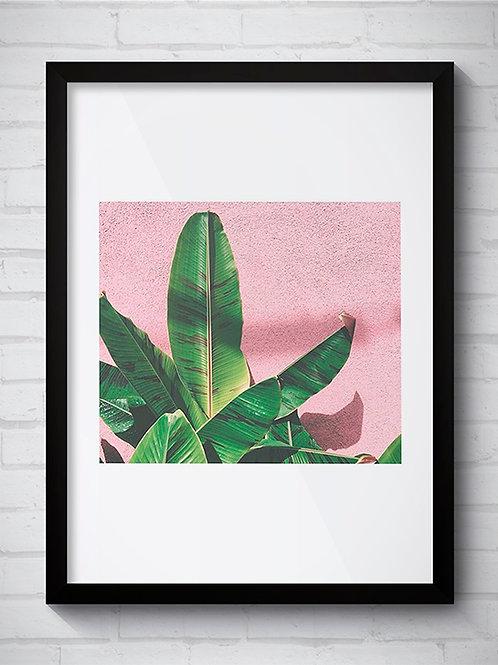 PLANTA ROSA 3
