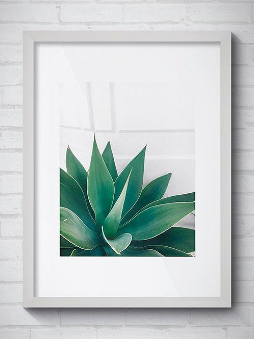 ESTETIC PLANT