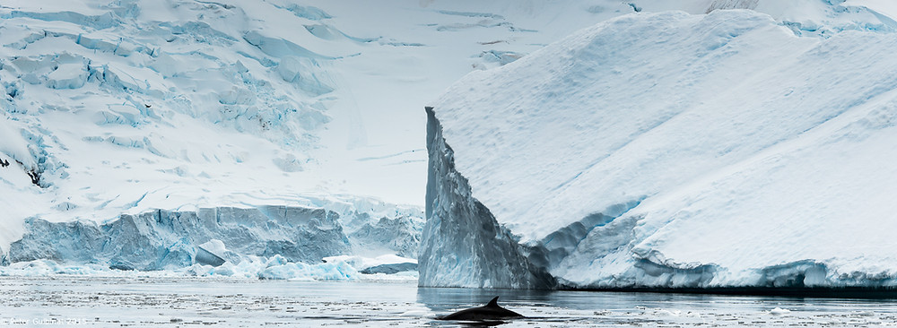 Antarctica_Panorama4_2.jpg