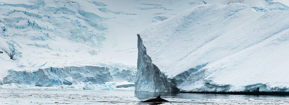 Antarctica I - Iceberg with Whale
