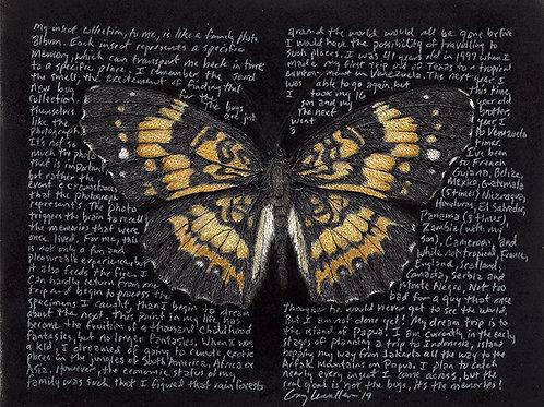 "Chlosyne nectais 8x10"" Limited Edition Print"